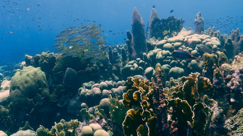 collected essays on the economics of coral reefs Corals and coral reefs are seriously degraded in most tropical seas this collection of essays presents a number of case studies on the economic analysis of coral reefs the authors, some of the top experts in the field, are from academia, industry, international and non-governmental.