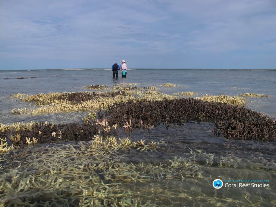 2016_05_30_Tote-Korallen_Surveying dead coral in shallow waters at Cygnet Bay Western Australia April 2016 Credit Chris Cornwall_Bildgröße ändern