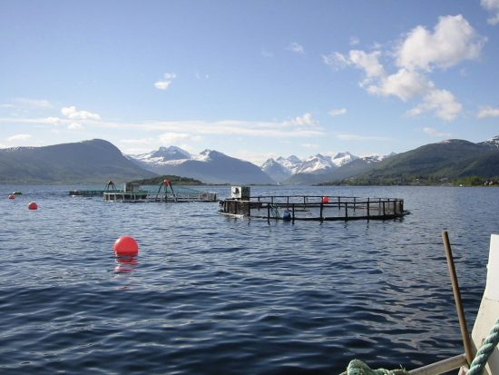 2016_07_08_Überfischung_HI_107714_Lachsfarm_Norwegen__c__Jo_Benn_WWF-Canon_Bildgröße ändern