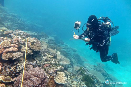 Researcher Grace Frank completes bleaching surveys, Southern GBR_Bildgröße ändern