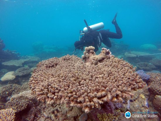 Scientists assess coral mortality following the bleaching event, Northern GBR, Nov 2016_Bildgröße ändern