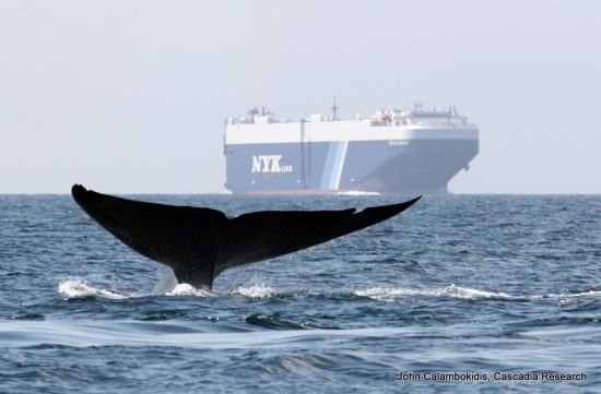 Whale_and_Ship2-001