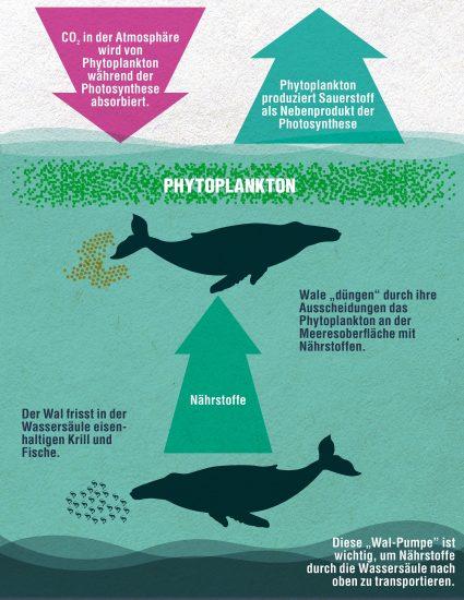 Infografik-Phytoplankton_c_WDC