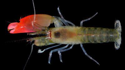 2017_04_12_Pink Floyd shrimp_01_c_Arthur_Anker