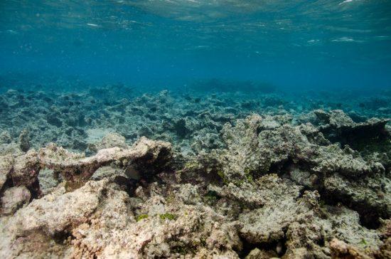 3 dead reef Guam Mike McCue