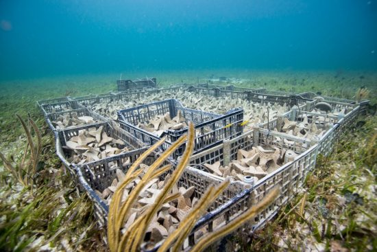 6 preconditioning coral seeding units II Paul Selvaggio