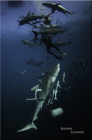 Underwater Impressionen