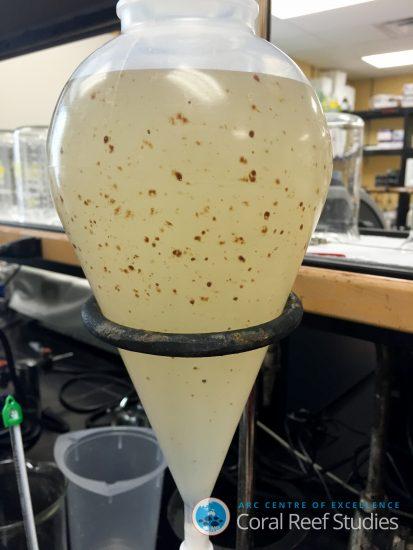 Fish larvae in oil