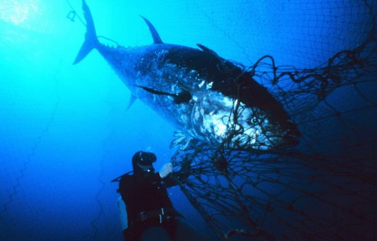 2018_02_24_Thunfisch-Beifang_Tuna_c_NOAA_02