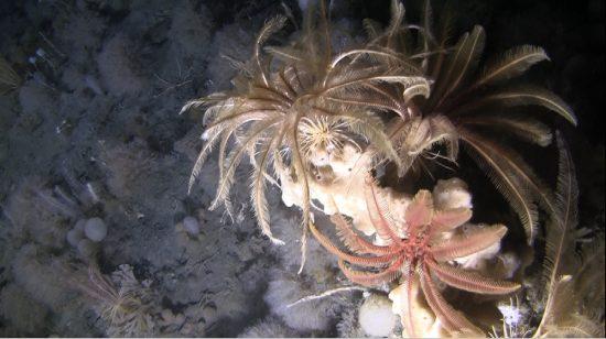 Underwater Antarctic submarine image.