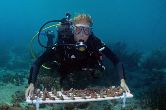 A SECORE diver with a tray of Seeding Units that will be outplanted soon.