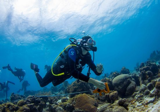 Participants of a SECORE workshop on coral restoration in Cura- çao are preparing a transect, in which the Seeding Units covered with settlers will be outplanted afterwards.