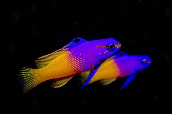 Belize_2018_Unterwasser_261_Bildgröße ändern