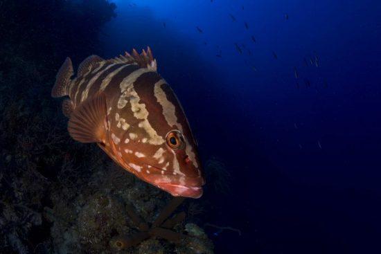 Belize_2018_Unterwasser_341_Bildgröße ändern