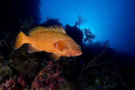 Belize_2018_Unterwasser_523_Bildgröße ändern