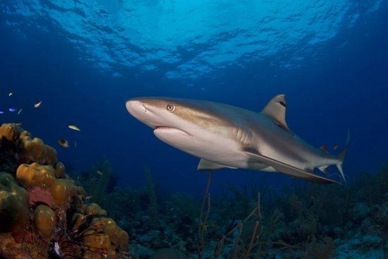 Belize_2018_Unterwasser_620_Bildgröße ändern