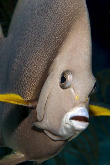 Belize_2018_Unterwasser_735_Bildgröße ändern