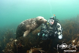 UK diver with Grey Seal
