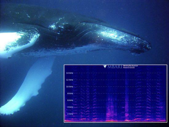 humpback+spectrogram