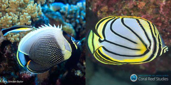 butterflyfish_mediarelease