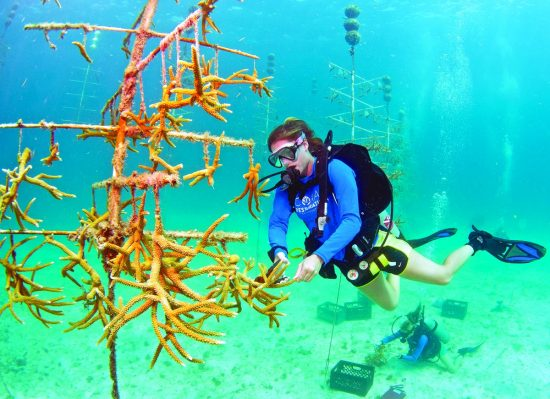 An employee from the Coral Restoration Foundation works underwater in the organization's coral nursery. The foundation is pioneering efforts to develop techniques to preserve coral reefs around the world and its 1-acre coral nursery, located off Key Largo in the Florida Keys National Marine Sanctuary, is possibly the world's largest.. Photo by Tim Grollimund/Florida Keys News Bureau