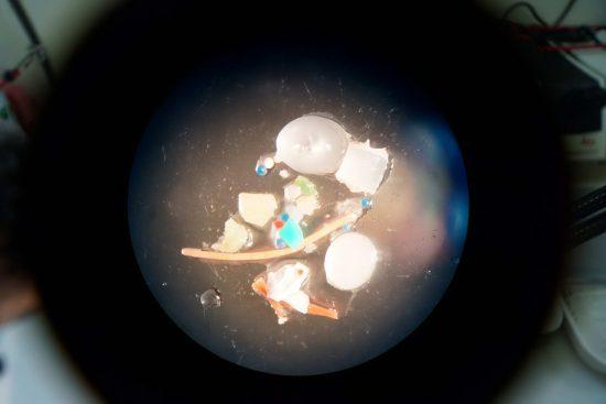 Mikroplasik_Mikroskop