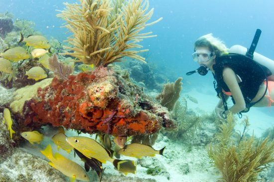 A diver explores the coral reef in the Florida Keys National Marine Sanctuary off Key Largo, Fla. The reef system in the Keys is the only contiguous coral barrier reef in North America. Photo by Bob Care/Florida Keys News Bureau