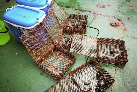 csm_RV_Aranda_Blue_mussel_caging_SYK E_Ilkka_Lastumäki_11__61b2d427bd_klein