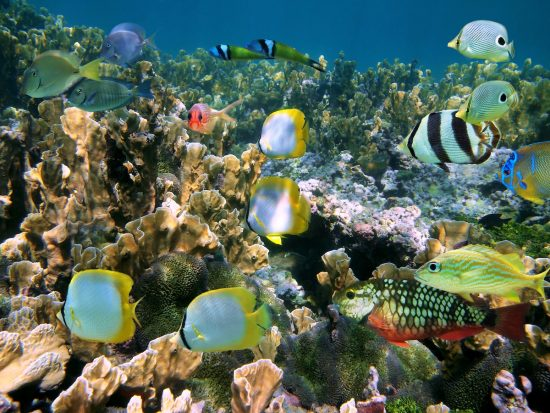 See a lot of tropical fish and corals in this dive destination