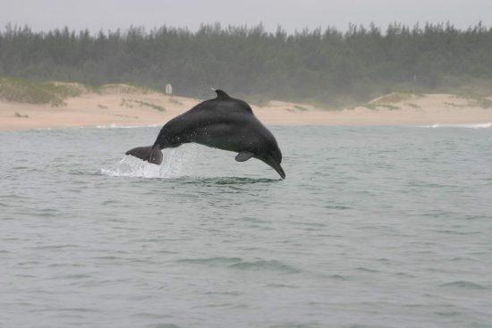 RB humpback_Brett Atkins original_klein