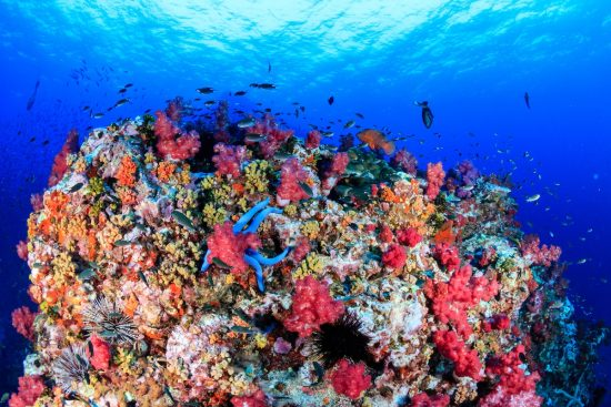 A colorful, healthy, tropical coral reef at dawn