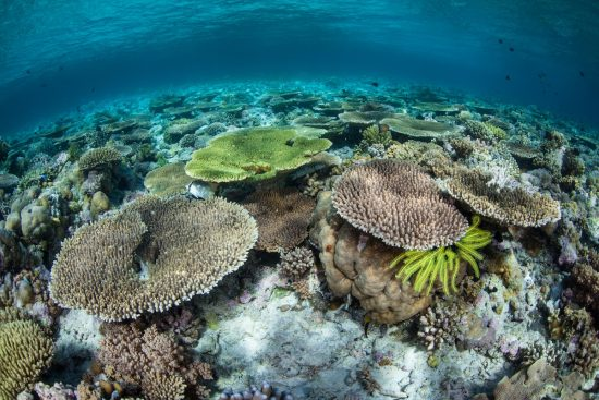 Healthy Corals in Wakatobi National Park