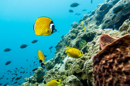Chumphon Pinnacle is an absolute must-dive because it has a beautiful underwater world.