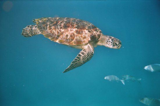 Turtle1_02_Schuetze77