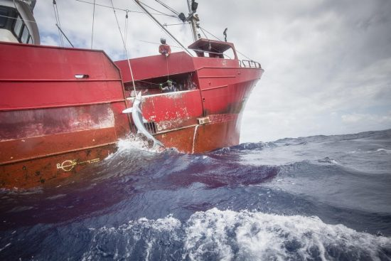 Greenpeace ship Esperanza is investigating the overfishing of sharks in the North Atlantic ocean on transit to the Azores., Pole to Pole Tour 2019
