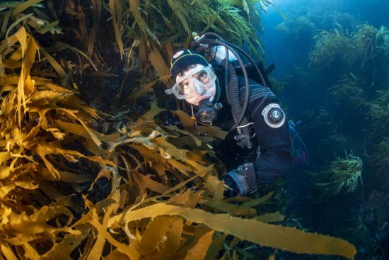 Greenpeace oceans campaigner Thilo Maack during diving at Mount Vema. He is surrounded by a thick canopy of kelp and seaweed.