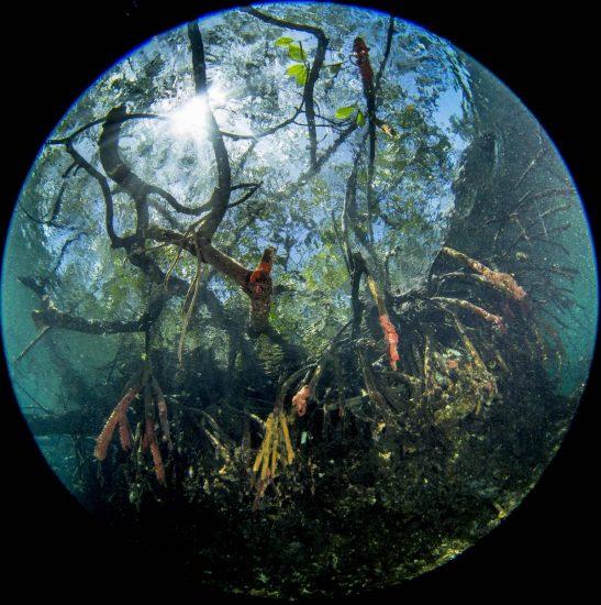 Mangroven_01