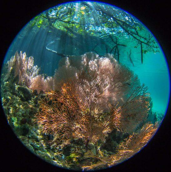 Mangroven_03