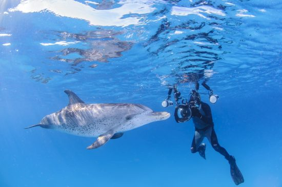 Underwater Photographer with Friendly Dolphin in Clear Waters of Bahamas - wonderful dive destinations
