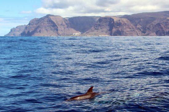 Fleckendelfin-La-Gomera_klein