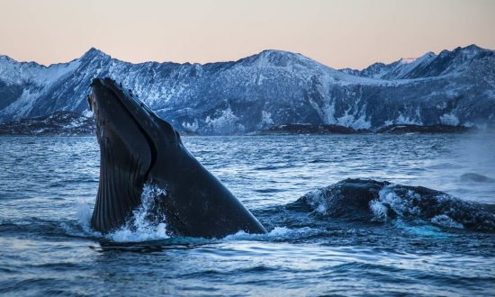 20150121_whales_00065