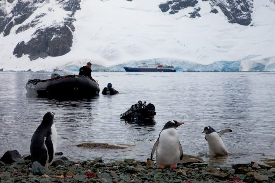 Ice Diving - You can see penguins during a dive