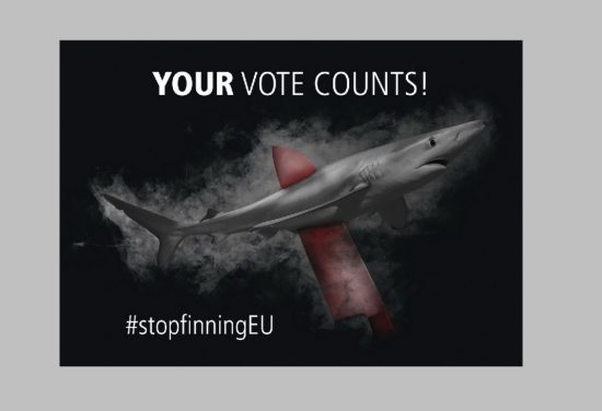 Shark finning - sharks will die without their fins