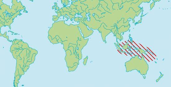 Tauchen mit Pygmäen Seepferchen