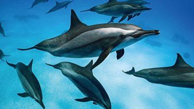 Tauchen mit Delphinen