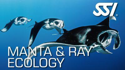 Launch of Manta & Ray Ecology