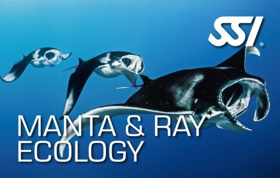Launch of Manta & Ray Ecology