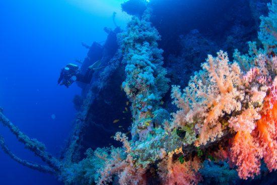 Numidia Wreck - Red Sea