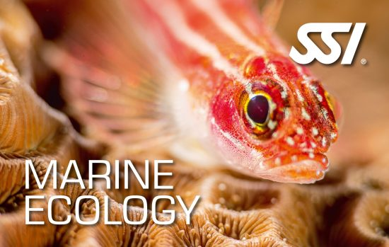 Marine Ecology Promotion - Digital Kit free of charge