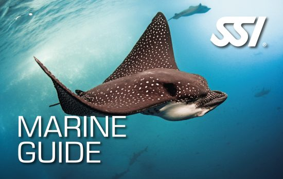 SSI launches new recognition level Marine Guide